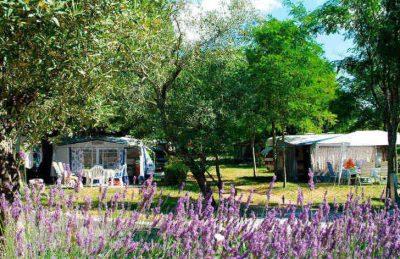 Camping le Petit Bois Pitch
