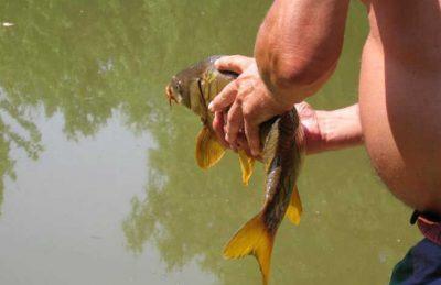 Campsite le Repaire Lake Fishing