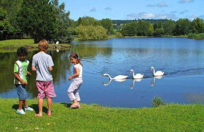 La Vallee de Deauville Lake Swans