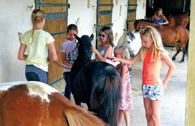 Sequoia Parc Horse Riding